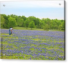 Photographing Texas Bluebonnets Acrylic Print by Connie Fox