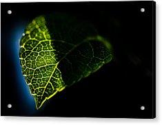 Photosynthesis Neighborhoods Acrylic Print by Brian Xavier