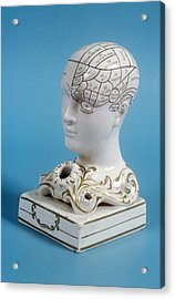 Phrenology Ink Well Acrylic Print by Science Photo Library
