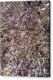 Acrylic Print featuring the photograph Phylum by Ramona Matei