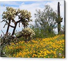 Picacho Peak Wild Flowers Acrylic Print