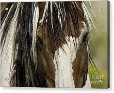 Picasso's Eyes Acrylic Print by Carol Walker