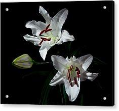 Pick-a-lily Acrylic Print by Paul Indigo
