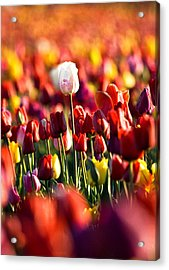 Acrylic Print featuring the photograph Pick Me by Ronda Kimbrow