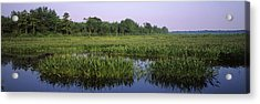 Pickerelweed In A Lake, Long Pond Acrylic Print by Panoramic Images