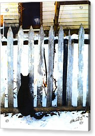 Picket Fence Love Acrylic Print by Elia Peters