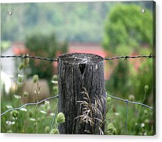 Picket Fence Wild Flowers Acrylic Print by France Laliberte