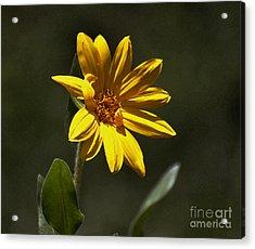 Pickin' Wildflowers  Acrylic Print by Juls Adams