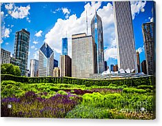 Picture Of Lurie Garden Flowers With Chicago Skyline Acrylic Print by Paul Velgos