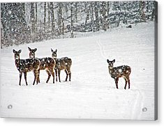 Picture Perfect Deer Acrylic Print by Aimee L Maher Photography and Art Visit ALMGallerydotcom