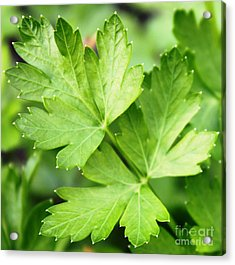 Picture Perfect Parsley Acrylic Print by French Toast