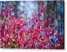 Picturesque Autumn - Featured 3 Acrylic Print by Alexander Senin