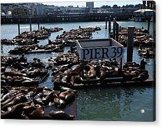Pier 39 San Francisco Bay Acrylic Print by Aidan Moran