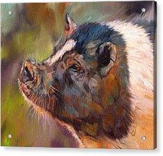 Pig Acrylic Print by David Stribbling