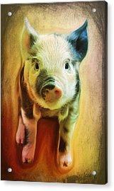 Pig Is Beautiful Acrylic Print by Barbara Orenya