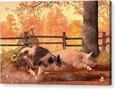 Pig Race Acrylic Print