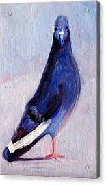 Pigeon Bird Portrait Painting Acrylic Print