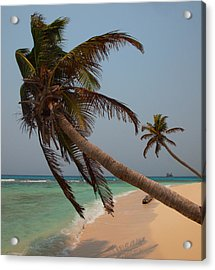 Pigeon Cays Palm Trees Acrylic Print