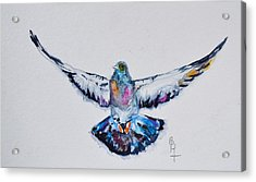 Pigeon In Flight Acrylic Print by Beverley Harper Tinsley