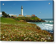 Pigeon Lighthouse Acrylic Print