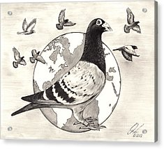Pigeon Race Acrylic Print