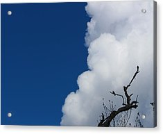 Pigeons Follow Clouds Acrylic Print by Kym Backland