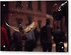 Pigeons In Patan Square, Kathmandu-nepal Acrylic Print