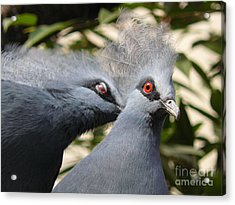 Acrylic Print featuring the photograph Pigeons by Jane Ford