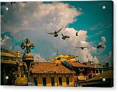 Pigeons Near Monastery In Boudnath Kathmandu Acrylic Print
