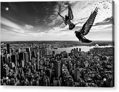 Pigeons On The Empire State Building Acrylic Print by Sergiosousa