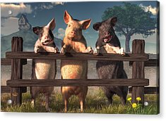 Pigs On A Fence Acrylic Print