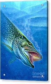 Pike And Ice Fishing Acrylic Print by Jon Q Wright