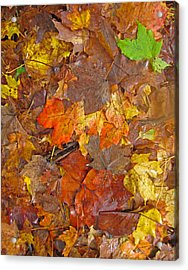 Pile Of Leaves Acrylic Print
