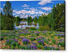 Pilgrim Creek Wildflowers Acrylic Print