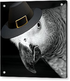 Pilgrim Parrot Acrylic Print