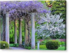 Pillars Of Wisteria Acrylic Print by Michael Hubley