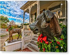 Pillot House Dogs Acrylic Print by Tim Stanley