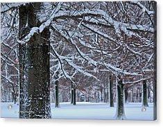 Acrylic Print featuring the photograph Pin Oak Snow by Ann Murphy