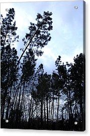 Pin Tree Sunset Acrylic Print by Michel Mata