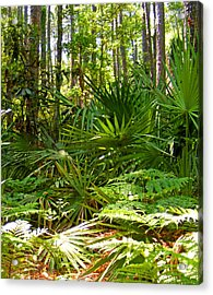 Pine And Palmetto Woods Filtered Acrylic Print