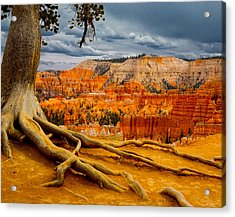Pine At Bryce Acrylic Print