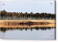 Pine Barrens Reflections Acrylic Print by John Rizzuto