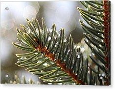 Pine Bough Dewdrops Acrylic Print