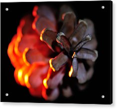 Pine Cone Fire Acrylic Print by Todd Soderstrom