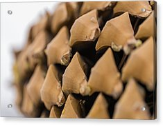 Pine Cone Study 3 Acrylic Print by Scott Campbell