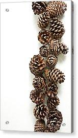 Pine Cones Acrylic Print by Edward Fielding