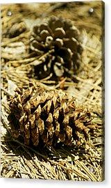 Pine Cones In The Valley-yosemite Series 30 Acrylic Print by David Allen Pierson