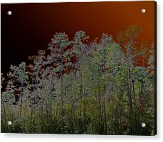 Pine Forest Acrylic Print by Connie Fox