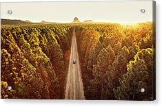 Pine Forest Acrylic Print by Flyfilm.tv