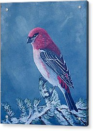Pine Grosbeak Acrylic Print by Fran Brooks